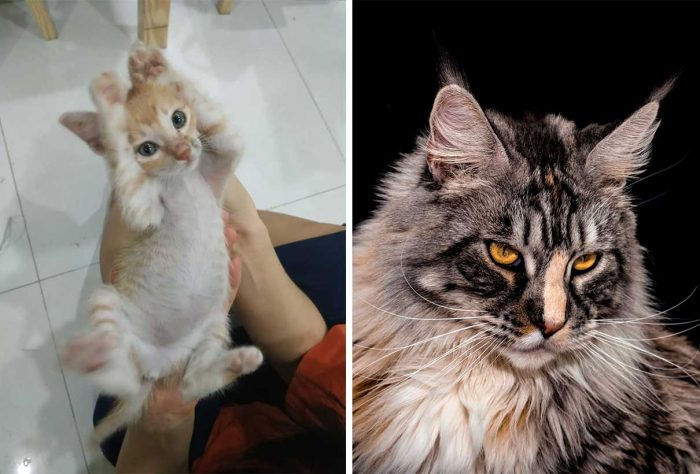 Best Cat Photos Sent To Us This Week (24 November 2019)