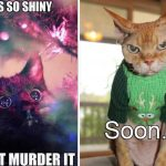 The love-hate relationship between cats and Christmas
