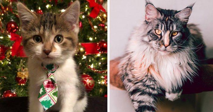 Best Cat Photos Sent To Us This Week (15 December 2019)