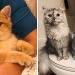 Best Cat Photos Sent To Us This Week (29 December 2019)