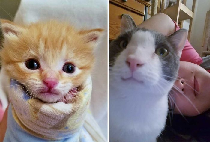 Best Cat Photos Sent To Us This Week (08 December 2019)