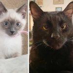 Best Cat Photos Sent To Us This Week (22 December 2019)