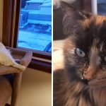 Best Cat Photos Sent To Us This Week (26 January 2020)