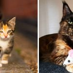 Best Cat Photos Sent To Us This Week (12 January 2020)