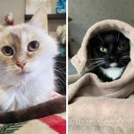 Best Cat Photos Sent To Us This Week (05 January 2020)