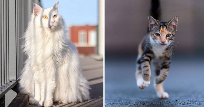 Best Cat Photos Sent To Us This Week (23 February 2020)