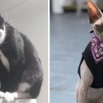Best Cat Photos Sent To Us This Week (09 February 2020)