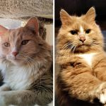 Best Cat Photos Sent To Us This Week (02 February 2020)