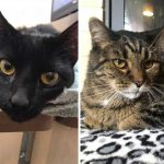 Best Cat Photos Sent To Us This Week (16 February 2020)