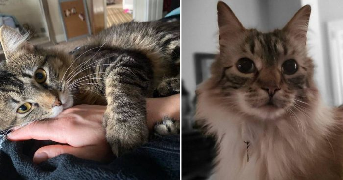Best Cat Photos Sent To Us This Week (22 March 2020)