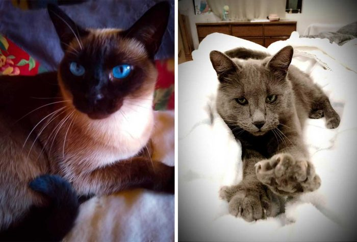 Best Cat Photos Sent To Us This Week (01 March 2020)