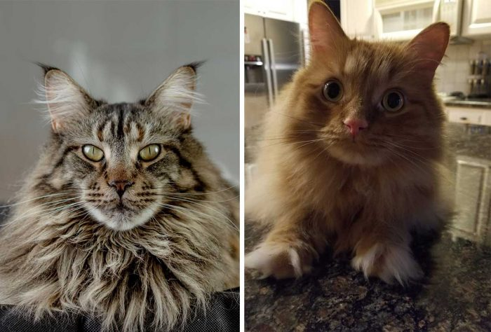 Best Cat Photos Sent To Us This Week (29 March 2020)