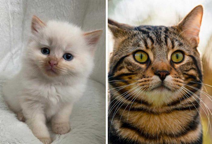 Best Cat Photos Sent To Us This Week (26 April 2020)