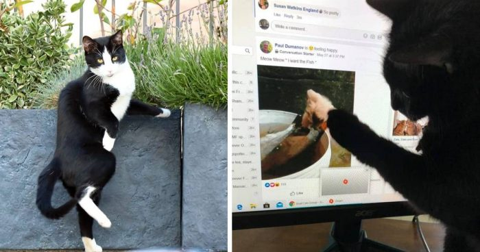 Best Cat Photos Sent To Us This Week (31 May 2020)
