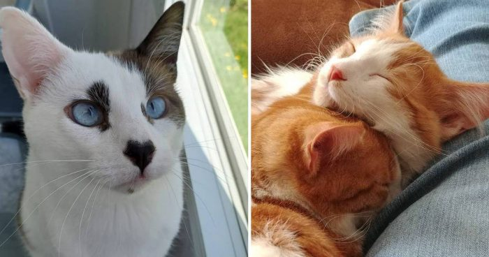 Best Cat Photos Sent To Us This Week (03 May 2020)