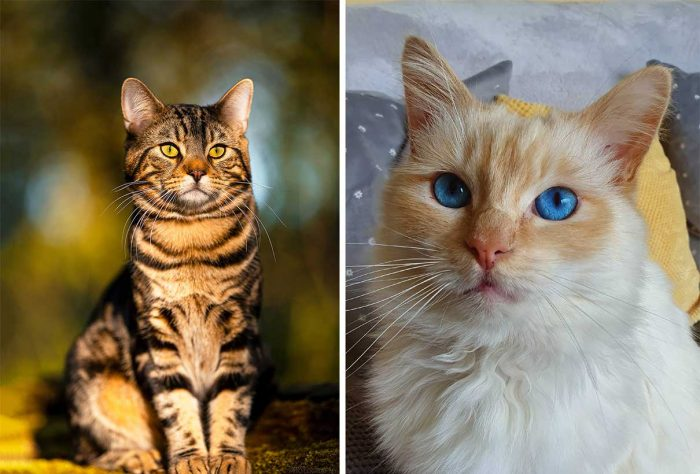 Best Cat Photos Sent To Us This Week (10 May 2020)