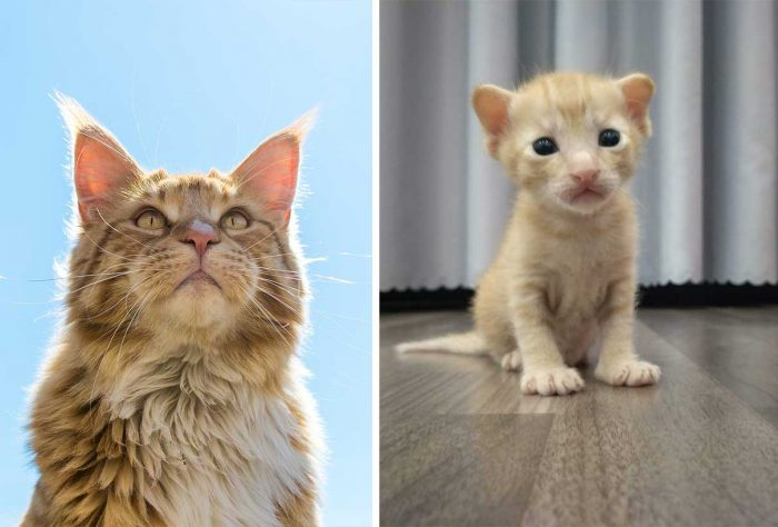 Best Cat Photos Sent To Us This Week (24 May 2020)