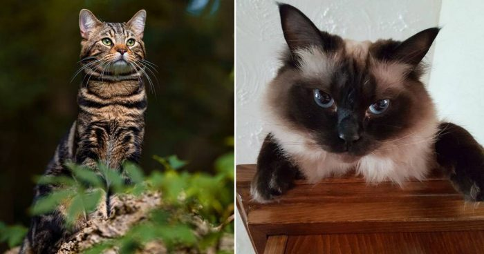Best Cat Photos Sent To Us This Week (28 June 2020)