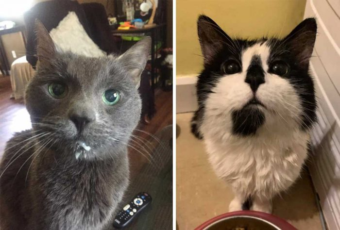 Best Cat Photos Sent To Us This Week (09 August 2020)