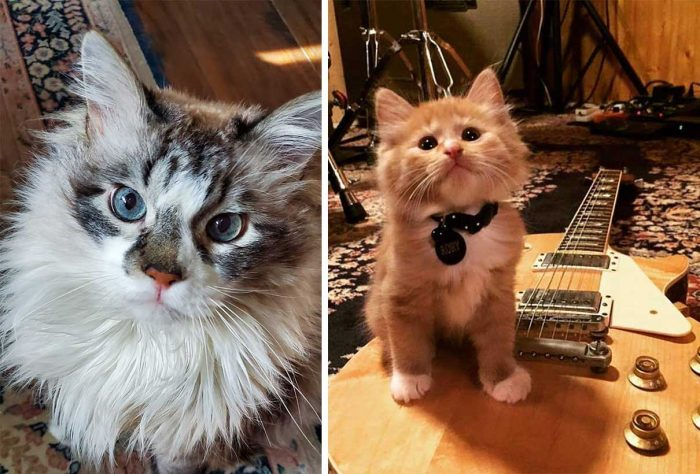 Best Cat Photos Sent To Us This Week (23 August 2020)