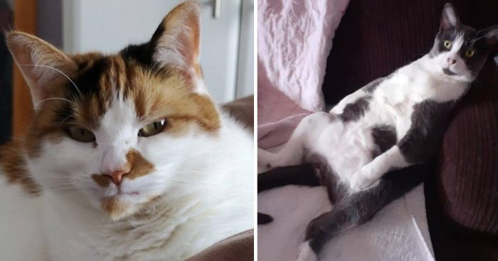10 Cute And Fun Cat Moments To Brighten Up Your Day