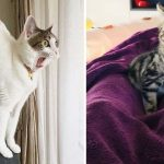 These 17 Overdramatic Cats Will Make You Laugh