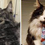 Best Cat Photos Sent To Us This Week (27 September 2020)