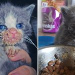 14 Times Cats Made A Mess While Eating