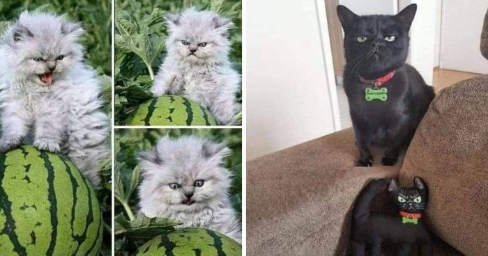 These 15 Cat Memes Are Hilarious