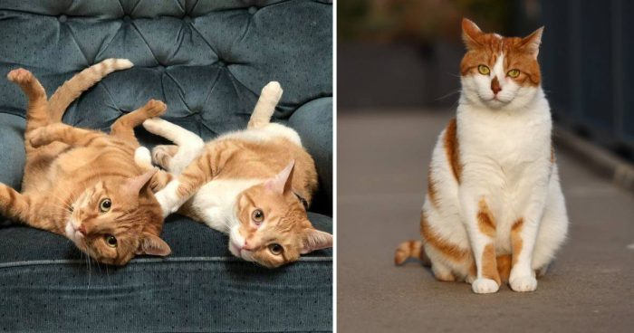 Happy Ginger Cat Appreciation Day: 20 Cute Moments