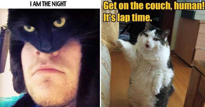 10 Funny Cat Memes That Will Make You Laugh