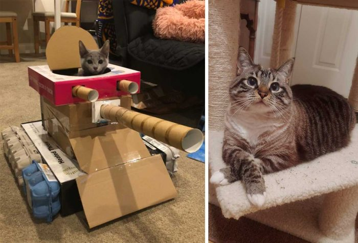 Best Cat Photos Sent To Us This Week (20 September 2020)