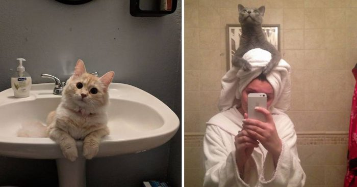 10 Funny Curious Cats Inspecting Their Hoomans In The Bathroom