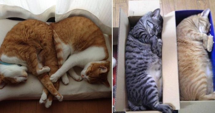 12 Cute Photos Of Cats Napping Together In Weird Positions