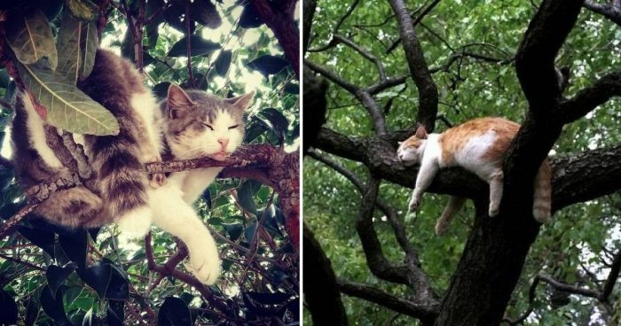 14 Cats Caught Sleeping In Trees