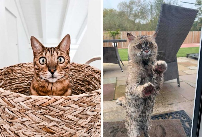 Best Cat Photos Sent To Us This Week (18 October 2020)