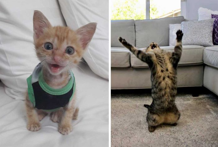 Best Cat Photos Sent To Us This Week (04 October 2020)