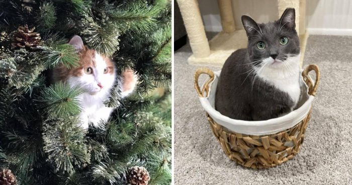 11 Cute And Majestic Cats
