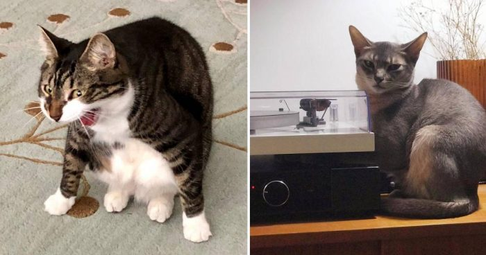 12 Weird Funny Cats Exposed By Their Owners