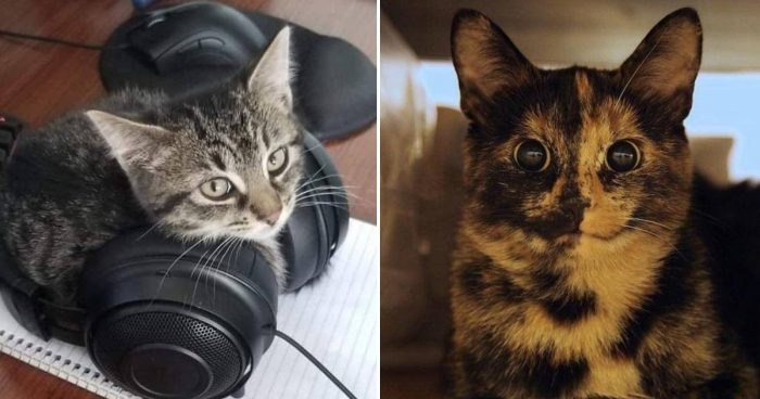 These 10 Cute Cats Will Make You Smile