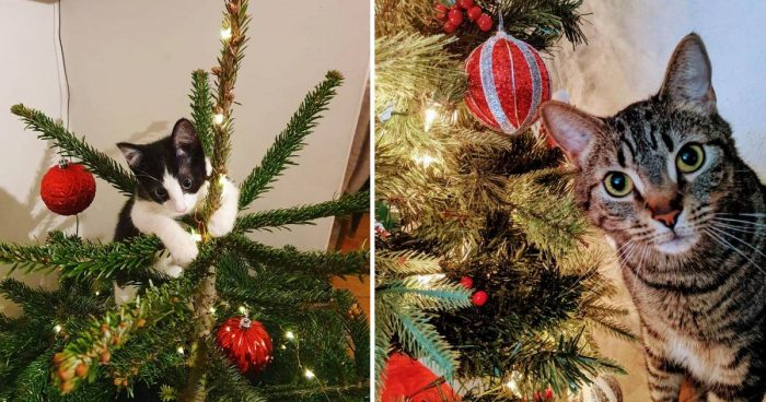 14 Cute Cats Enjoying The Christmas Tree
