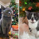 Best Cat Photos Sent To Us This Week (27 December 2020)