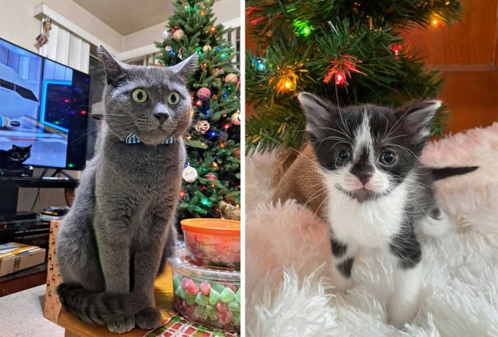 Best Cat Photos Sent To Us This Week (27 December 2020)