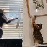 A Funny Compilation With Adorable Jerks In Action (14 Pics)