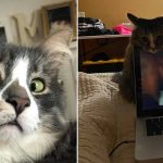 Best Cat Photos Sent To Us This Week (17 January 2021)