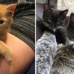 These 10 Kittens Are The Purrfect Way To Start The Weekend
