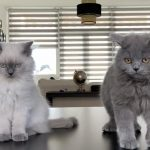 These Kittens Are Just Too Cute (12 Pics)
